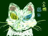 不思議な猫