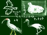 鳥の天然記念物TOP4