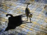 [2009-06-12 14:49:17] Shadow