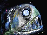 [2013-09-02 16:29:48] 深海のやつ