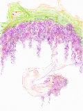 [2009-05-06 17:34:30] 藤棚ちゃんにまた逢いたい