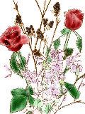 [2011-10-28 22:37:35] 今週の職場の花(別フロア)