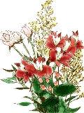 [2012-01-31 22:32:44] 今週の職場の花