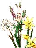[2012-02-29 22:42:11] 今週の職場の花