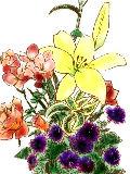 [2012-03-02 23:02:36] 今週の職場の花(別フロア)