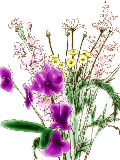 [2012-03-06 21:38:12] 今週の職場の花