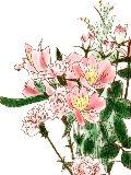 [2012-03-13 00:22:00] 今週の職場の花
