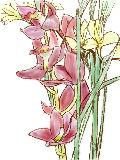 [2012-03-20 23:34:21] 今週の職場の花