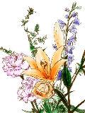 [2012-03-22 23:29:13] 今週の職場の花(別フロア)