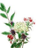 [2012-04-06 00:05:26] 今週の職場の花