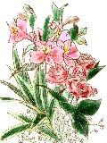 [2012-04-23 22:44:21] 今週の職場の花