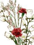 [2012-05-01 23:09:20] 今週の職場の花