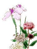 [2012-05-08 22:56:01] 今週の職場の花