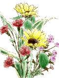 [2012-05-16 00:29:43] 今週の職場の花