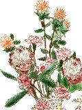 [2012-05-26 01:04:15] 今週の職場の花(別フロア)