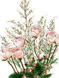 [2012-05-28 22:12:08] 今週の職場の花
