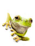 [2012-11-21 22:50:47] 蛙2