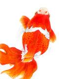 [2013-10-08 15:08:13] 金魚
