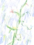[2019-03-12 00:25:53] 空に咲く