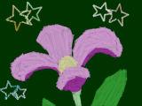 [2015-05-17 18:21:40] なんか花